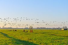 Free Horses And Geese Royalty Free Stock Photo - 28128615