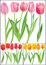 Free Beautiful Tulips In Different Color Royalty Free Stock Images - 28128809