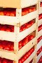 Free Fresh Tomato Stock Photography - 28131212