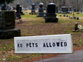 Free No Pets Allowed In Cemetery Sign Royalty Free Stock Images - 28132819