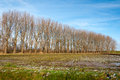 Free Row Of Bare Trees In Autumn Royalty Free Stock Photography - 28136627