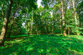Free Beautiful Deciduous Forest Royalty Free Stock Photo - 28138905