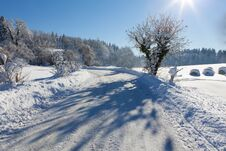 Frozen Trees And Road, Great Shadows Stock Image