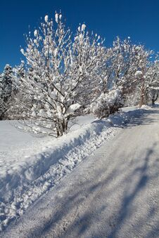 Snow-covered Road In Forest Stock Images