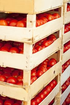 Free Fresh Tomato Stock Photography - 28131212