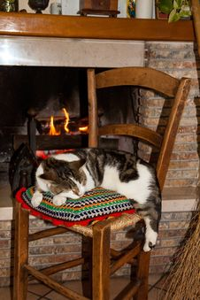 Free A Cat Sleeping On A Chair Royalty Free Stock Photography - 28131277
