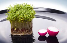 Free Island Of Cress And Boats Of Radish Royalty Free Stock Image - 28131726