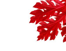 Free Red Leaves Border On White Background Stock Image - 28134621