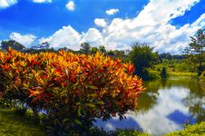 Free Bush And Small Pond. Royalty Free Stock Photography - 28137537
