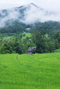 Free Green Rice Paddy Terrace In Thailand Royalty Free Stock Image - 28149726