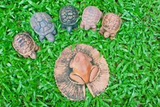 A Pottery Of Frog And Turtles Royalty Free Stock Photo