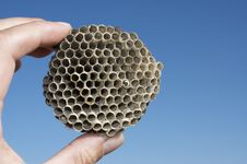 Free Wasps  Nest Stock Photos - 28145783