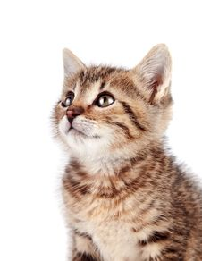 Free Portrait Of A Kitten Stock Photography - 28148872