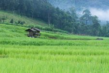 Free Green Rice Paddy Terrace And A Small Hut Stock Photo - 28149630