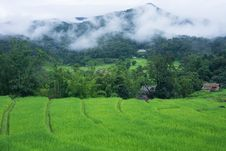 Free Terraced Rice Farm In Country Side Stock Photos - 28150013