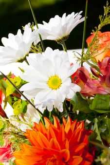 Free Orange And White Flowers Stock Images - 28152714