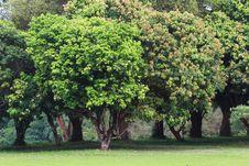 Free Tree Background Stock Photo - 28155360