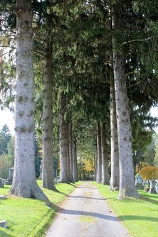 Free Gorgeous Tall Pines At The Cemetary Stock Images - 28155464