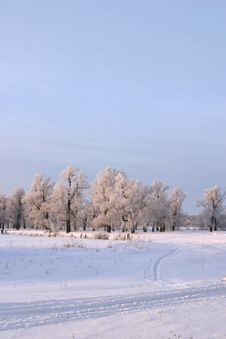 Free Winter Day Royalty Free Stock Photo - 28159175