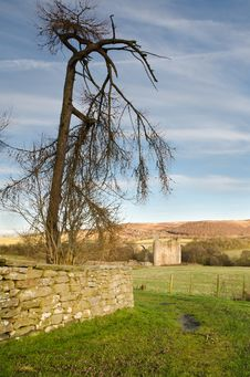 Edlingham Tree And Castle Stock Photography