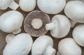 Free Mushroom Champignon Royalty Free Stock Images - 28163529