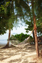 Free Hammock On The Beach Royalty Free Stock Images - 28169889