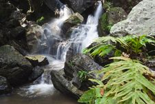 Free Falls In The Jungle Stock Photography - 28161512
