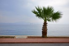 Free Palm Tree On The Beach Stock Photos - 28162193
