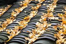 Free On The Roof Of The Fallen Leaves Of Ginkgo Stock Photography - 28167602