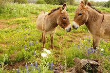 Free Kissing Donkeys Royalty Free Stock Images - 28167969