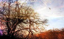 Winter Sun Glow Stock Photography