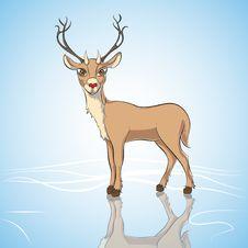 Free Deer Stock Images - 28168554