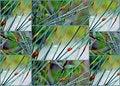 Free Bamboo Grass Royalty Free Stock Image - 28172536