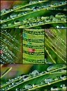 Free Raindrops On Palm Leafs Royalty Free Stock Photography - 28172787