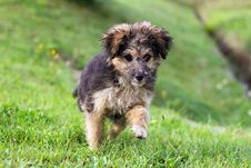 Free Cute Little Dog Playing In The Grass Stock Photo - 28175600