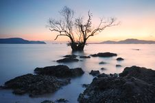 Free Mangrove Trees Sunset Stock Photo - 28176530