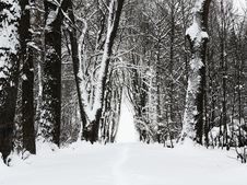 Free Winter Park Alley Royalty Free Stock Photography - 28176817