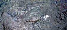 Free Pinguin Stock Image - 28177221