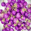 Free Purple Eggplant Stock Photography - 28186832