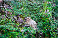 Free Monkey On The Green Wall Stock Photography - 28188142