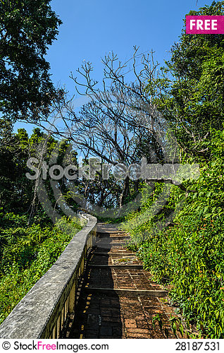Free One Way Between Forest Stock Image - 28187531