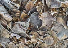 Free Frosted Fallen Leaves Stock Photography - 28180622