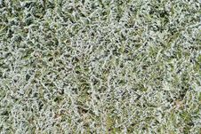 Frosty Hedge Detail Royalty Free Stock Photography