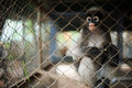 Free Monkey In The Cage Stock Photography - 28191102