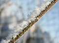Free Branch Covered In Ice Royalty Free Stock Photo - 28193355