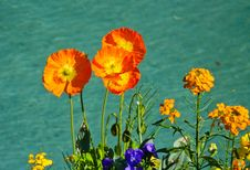 Free Flowers Royalty Free Stock Images - 28190549