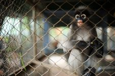 Monkey In The Cage Stock Photography