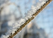 Branch Covered In Ice Royalty Free Stock Photo