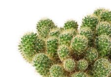 Green Cactus Close Up Stock Image