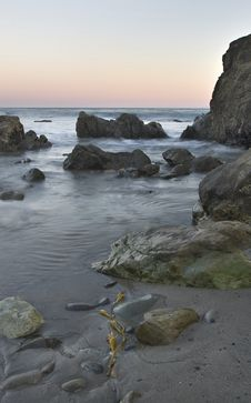 Free Coastal Kelp Stock Photos - 28197063